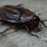cockroach_square